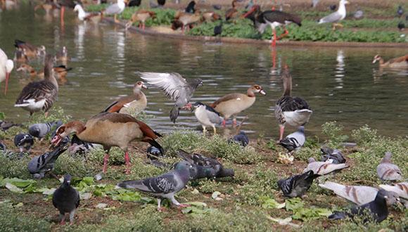 בני אדם הכחידו מאות רבות של מיני עופות ב-50,000 השנים האחרונות